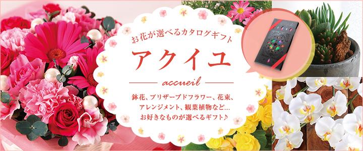 季節の花の贈り物