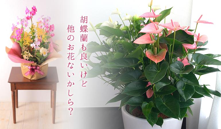 胡蝶蘭も良いけど他のお花ないかしら