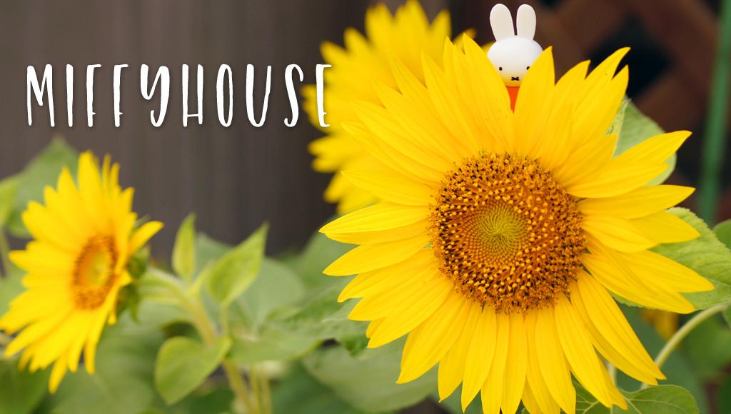 miffy (ミッフィー)・Dick Bruna キャラクターグッズの通販専門店 ...