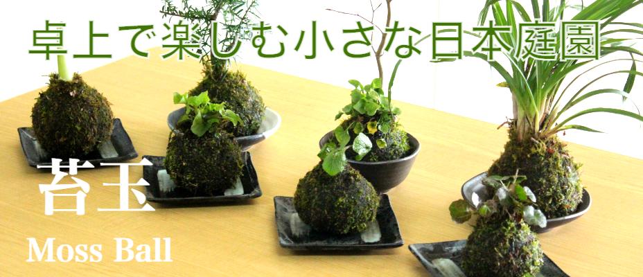 春に咲くお花達